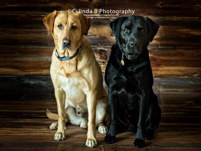 Pets, Photography, Syracuse NY, photos, dogs, cats, syracuse photography